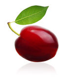 Plum isolated Stock Images
