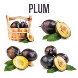 Plum isolated on white. Background royalty free stock image