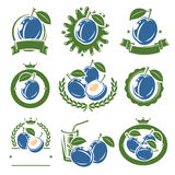 Plum labels and elements set. Vector Royalty Free Stock Image