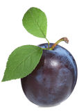 Plum with leaf Stock Image