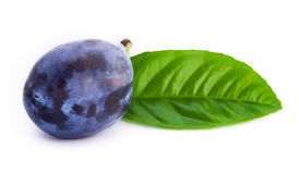 Plum with leaf Royalty Free Stock Images