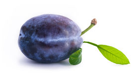 Plum with leaf Royalty Free Stock Image