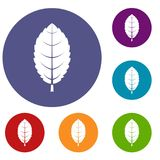 Plum leaf icons set. In flat circle red, blue and green color for web Royalty Free Illustration