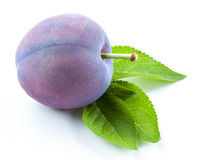 Plum with leaf isolated Stock Photos