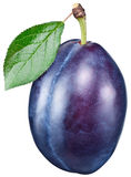 Plum with leaf. Royalty Free Stock Image