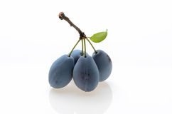 Plum with a leaf on a white background isolated Stock Image