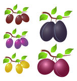 Plum and leaves royalty free illustration