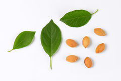 Plum leaves and stones Stock Photos
