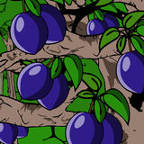 Plum with leaves on tree Royalty Free Stock Images
