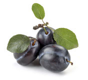 Plum and leaves Royalty Free Stock Images