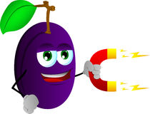 Plum with magnet Stock Images