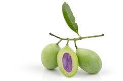 Plum Mango (Bouea macrophylla Griffith). Stock Photography