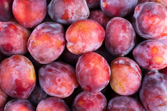 Plum many Stock Image