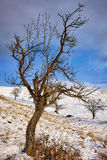 Plum orchard in winter Stock Photo