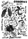 Plum and peach sketches Royalty Free Stock Photo