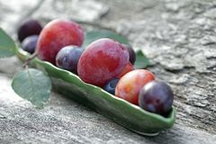 Plum pitter in action Stock Photos
