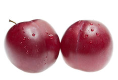 Plum (Plumus) Stock Photo