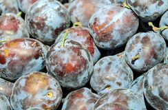 Plum, Real Plum, Fruit, Blue Violet Royalty Free Stock Photos