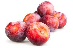 Plum red group Stock Photos
