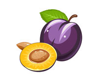 Plum. Ripe juicy fruit with nut and leaf Royalty Free Stock Images