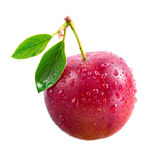 Plum. Ripe wet fruit with leaf Royalty Free Stock Photography