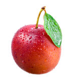 Plum. Ripe wet fruit with leaf Royalty Free Stock Image