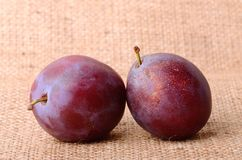 Plum on sackcloth Royalty Free Stock Images