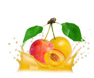 Plum splash Royalty Free Stock Image