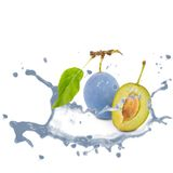 Plum splash Royalty Free Stock Images