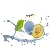 Plum splash Royalty Free Stock Images