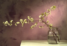 Plum still life. Japanese style still life of plum flowers arrangement Royalty Free Stock Photography