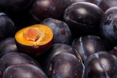 Plum study Royalty Free Stock Image