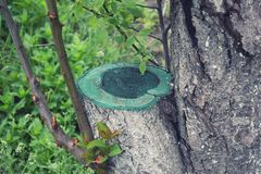 Plum Stump With Protruding Branches och sidor fjädrar arkivbilder