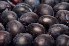 Plum texture Stock Photos
