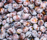 Plum texture Royalty Free Stock Images