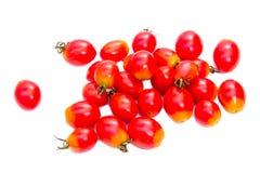 Plum Tomato Fotos de archivo