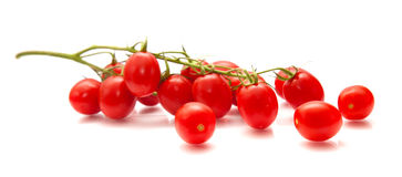 Plum tomatoes on the vine Stock Images