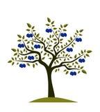 Plum tree Stock Image
