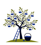Plum tree. Illustrated plum tree, ladder and basket of plums Stock Photo