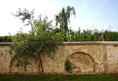 Plum Tree and Ancient Wall Stock Photos