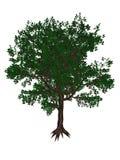 Plum tree - 3D render Royalty Free Stock Image