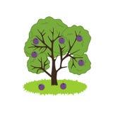 Plum Tree Icon Fotografia Stock
