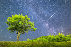 Plum tree Milky way Comet mode falling stars Royalty Free Stock Images