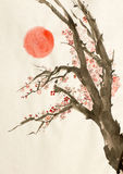 Plum tree red sun. Flowering plum tree and the red sun Royalty Free Stock Photography