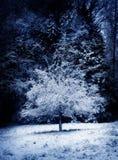 Plum Tree in Winter Royalty Free Stock Photos