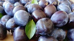 Fresh blue plums royalty free stock photos