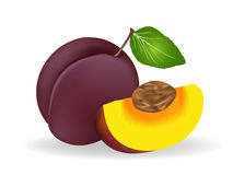 Plum. Vector illustration .  Plum on white background Royalty Free Stock Photography