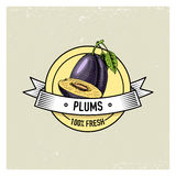 Plum Vintage, hand drawn fresh fruits background, summer plants, vegetarian and organic citrus and other, engraved. Royalty Free Stock Images