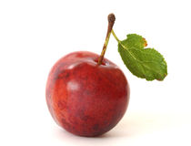 Plum on white background Stock Image