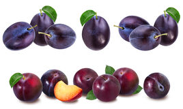 Plum on a white royalty free stock image